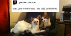 23 Times Cats Were The Absolute Best Part Of Tumblr