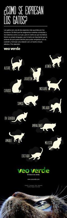 Cómo se expresan los gatos