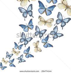 Butterfly Varastokuvat, valokuvat ja kuvat | Shutterstock