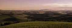 on the way to Idaho via Palouse yehaw - A view from the other side of Steptoe butte at sunrise. on a clear day you can see as far as Idaho. On A Clear Day, The Other Side, No Way, Idaho, Sunrise, This Or That Questions, Mountains, Photography, Travel