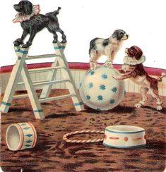 Oblaten Glanzbild scrap die cut chromo Zirkus circus cirque poodle dog Pudel