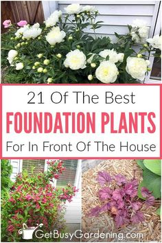 Don't be overwhelmed by the many foundation plant choices out there. Instead check out my detailed list of the 21 best foundation bushes, shrubs, and flowers. A combination of evergreen bushes, perennials, and flowering shrubs can create an eye-catching yard that not only improves the curb appeal, but also hides any sore spots like exposed foundation or boring siding. This list provides details on sun requirements, plant height, and bloom times to help ensure your choices are perfect for you. Outdoor Projects, Garden Projects, Beautiful Gardens, Beautiful Flowers, Evergreen Bush, Gardening For Beginners, Gardening Tips, All About Plants, Foundation Planting