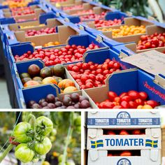 Vikentomater, a Tomato Farm in Sweden with over 80 kinds of tomatoes. They host a market of 10 to 15 local food producers selling bread, cheese, meat, potatoes, mushrooms, chocolate etc on Saturdays in the sumnmer.