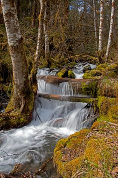 Hike off 101 along Hood Canal in Washington -Dosewallips River Trail