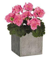 tiestos modernos Cement Flower Pots, Cement Planters, Garden Planters, Planter Pots, Planters For Sale, Square Planters, Cactus Decor, Exterior, Vase