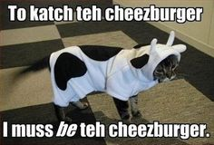 Ahh. I haven't had a good I can has cheeseburger cat meme in a while.
