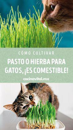 200 Mascotas E Ideas Para Apapacharlos Mascotas Perros Cosas Para Perros