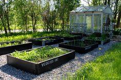 Voikukkapelto: Voikukkapelto 2009-2012