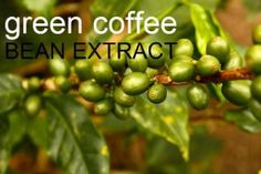 Unroasted pure green coffee bean extract that is making people lose weight #greencoffeebeanextract