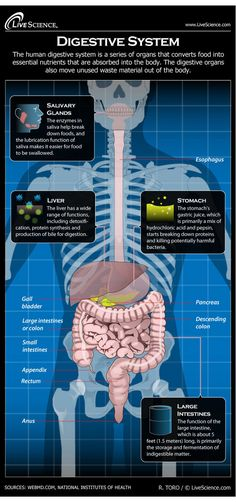 Infographic: all about your stomach and how digestion works.