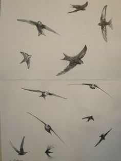 IMG_1769 Swifts by Jonathan Pomroy