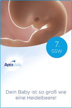 7. SSW: Das Gehirn deines Babys wird komplexer und teilt sich in Vorder-, Mittel- und Hinterhirn. Im Schwangerschaftskalender von Aptaclub erfährst du alles über die Veränderungen in deinem Körper & die Wachstumsphasen deines Babys! Babys, School, Movie Posters, Knowledge, Pregnancy Weeks, Brain, Middle, Bathrooms, Babies