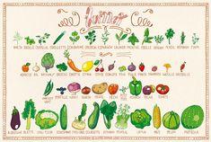 Comme chaque mois, sur mrmondialisation.org, voici le calendrier illustré des fruits et légumes du mois signé Claire-Sophie.
