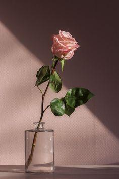 Valentine's Day rose bouquet photo by Jamie Street ( on Unsplash blumen Pink Flower Photos, Flower Images, Pink Flowers, Flowers Nature, Pink Roses, Flower Art, Aesthetic Objects, Pink Aesthetic, Aesthetic Indie