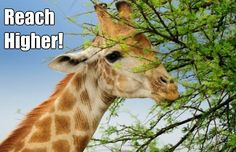 $1,000 Internet marketing commissions are high. $5,000 Internet marketing commissions are even higher! Learn more about it - http://www.highprofitmarginbusiness.com/online-business-with-a-high-profit-margin/ A giraffe wants to reach higher, so why shouldn't you?