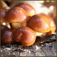 Good place to buy mushrooms and lots of good info Field And Forest Products, Inc. Growing Mushrooms, Bread Recipes, Summertime, Stuffed Mushrooms, Gardening, Hands, Organic, Fruit, Healthy