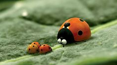 BBC iPlayer - Bigscreen :: Minuscule: The Private Life of Insects This is the cutest little series of 4 minute films. Great for a brain break for kids or adults. So cute and funny!
