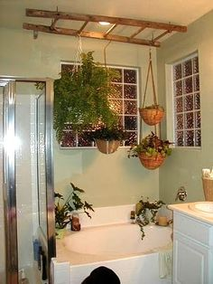 ferns...~ cute idea on how to hang the plants, just wouldn't hang it over my tub