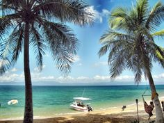Palms and boat on Wheeler (Toolgbar Island) Mission Beach, Tropical Paradise, Palms, Lush, Islands, Tourism, Boat, Australia, Country