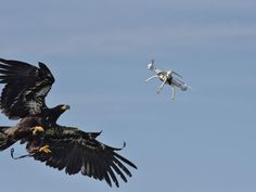 Attack of the Drone-Snatching Eagles Thriller, Drones, National Police, Natural Solutions, Far Away, Eagles, Bald Eagle, Illustration, Creatures