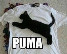 28 Amusing Animal Pictures That Are Guarantied To Make You Laugh - World's largest collection of cat memes and other animals Funny Animal Jokes, Cute Funny Animals, Funny Animal Pictures, Animal Memes, Cute Baby Animals, Funny Cute, Haha Funny, Cute Cats, Funny Humor