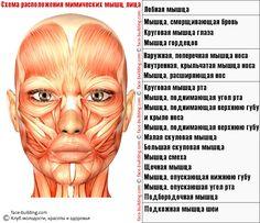 7 упражнений, которые разгладят кожу на лице. Обсуждение на LiveInternet - Российский Сервис Онлайн-Дневников