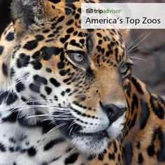 I would love to go on a road trip to a bunch of zoos for my honeymoon... Incredible animals at America's top zoos - see the list #kids #leopard #family
