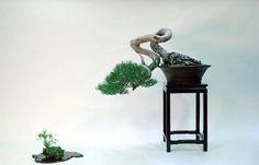 Pine by David Benavente