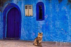 Found a cat in the blue City Morocco :-)