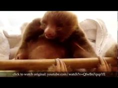 True Facts About Sloths *Warning mild adult language and freakin' hysterical!