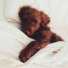 So stinkin' adorable! Puppy Love :: The most funny + cutest :: Free your Wild :: See more adorable Puppies + Dogs :: Cute Creatures, Beautiful Creatures, Animals Beautiful, Beautiful Images, Cute Puppies, Cute Dogs, Dogs And Puppies, Doggies, Funny Dogs