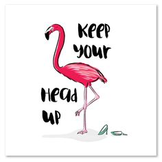#quote #flamingo #illustration #art