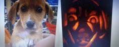 Pumpkin carving - puppy!