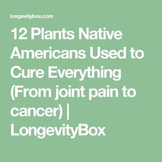12 Plants Native Americans Used to Cure Everything (From joint pain to cancer) | LongevityBox