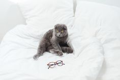 Chat regardant amoureusement lunettes Edie & Watson #glasses #cat #inlove #cute