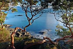East Sooke Park coastal trail, Vancouver Island Beautiful area, been here &… Great Places, Places To See, Beautiful Places, Vacation Wishes, Holiday Places, Travel Memories, Vancouver Island, Rocky Mountains, British Columbia