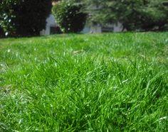 Htm, Herbs, Gardens, Garden Design, Plant Decor, Flowers, Spring, Herb