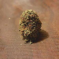 #Chemo #CCC #cannabiscup #weedsociety #weed #weed🍁  #weedphotography  #cannabiscommunity #medicalcannabis #weedlife #hightimes #halfbaked #pot #ganja #canadadank #Highsociety  #Regram via @johnnycannabis)
