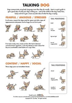 Find out what your dog's actions mean! #infographic #bionic www.bionicplay.com