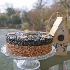 Yummy bird seed cake