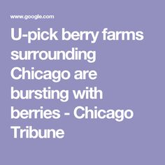 U-pick berry farms surrounding Chicago are bursting with berries - Chicago Tribune