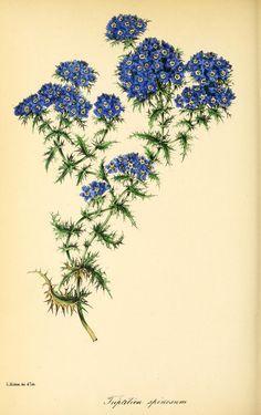 v.10 (1844) - Paxton's magazine of botany, - Biodiversity Heritage Library