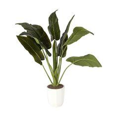 Large Artificial Plant - Kmart $29