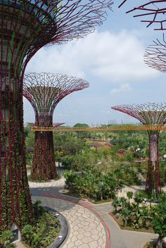 The Intercontinental Gardener: Supertree Grove at the Gardens by the Bay