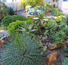 Rock Garden With Succulents In Bay Area Gardening