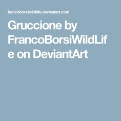Gruccione by FrancoBorsiWildLife on DeviantArt