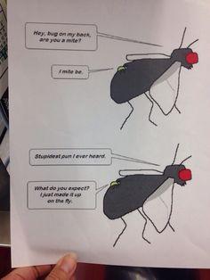 Fly joke