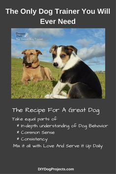 DIY Dog Projects - Our #1 Most Recommended Dog Behavior Expert