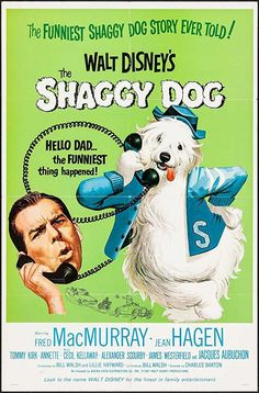 """Movie Poster for the 1967 rerelease of the Walt Disney film """"The Shaggy Dog"""" starring Fred MacMurray, Annette Funicello, and Tommy Kirk. It was the first live-action comedy produced by Disney. Home Disney Movie, Disney Movie Posters, Disney Films, Disney Fun, Walt Disney, Film Posters, Disney Live, Annette Funicello, Dog Poster"""