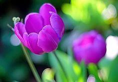 beautiful flowers | flowers for flower lovers.: Beautiful flowers wallpapers.